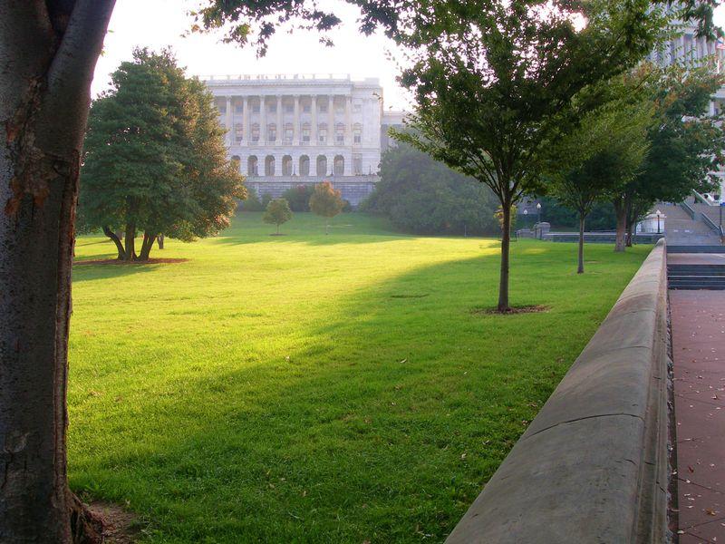 Casey Trees_ Capitol trees