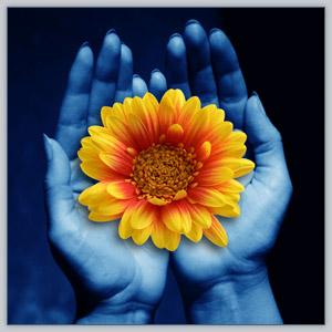 Giving_flower