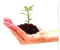 Seedling009