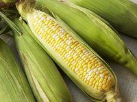 Corn_on_cob
