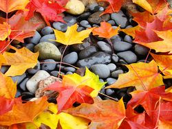 Colorful-autumn-leaves