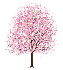 Illustration_cherry_tree
