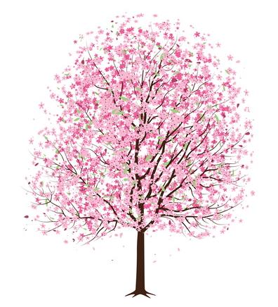 Illustration_cherry_tree