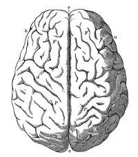 Donor_brain
