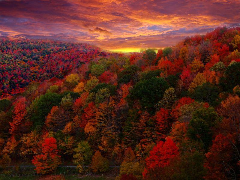 Fall_Foliage_Photography