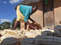 African_smallholder_farmer