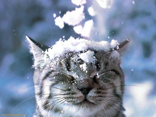 Winter-wonderland-tumblr-3