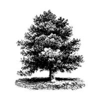 Teagle-Foundation-Tree-Icon