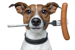 Puppy_with_fork_hiRes