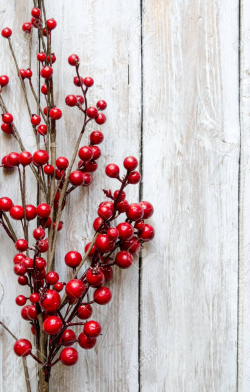 48159486-boughs-of-holly-for-christmas-decoration