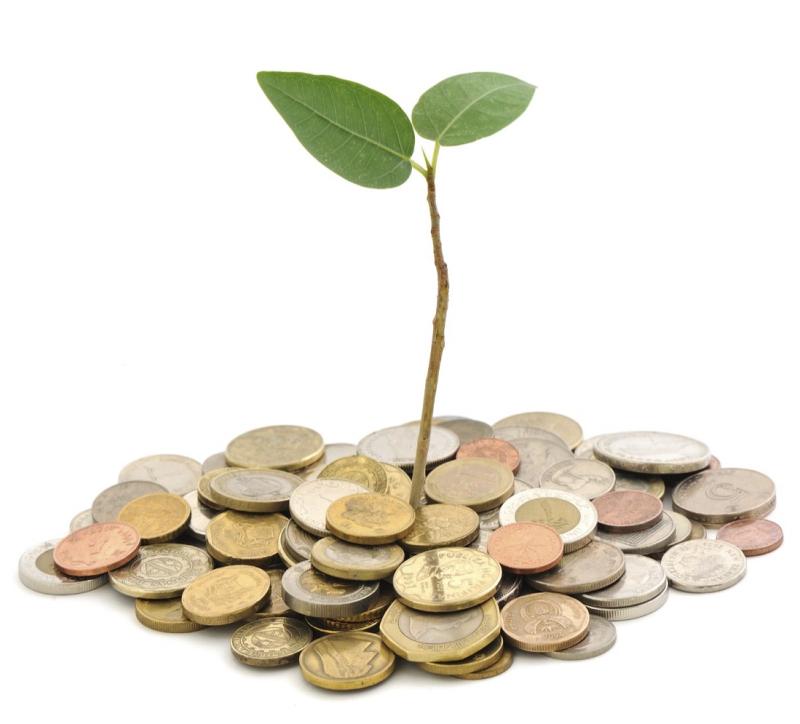 Money_seedling